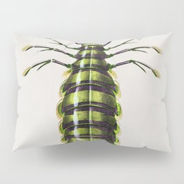 Giant mantis shrimp (Squilla Maculata) illustrated by Charles Dessalines D Orbigny (1806-1876) Pillow Sham