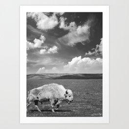 Great White Buffalo Art Print