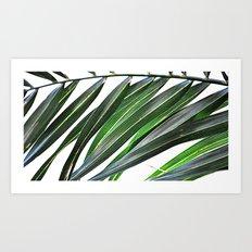 Palm nature Art Print