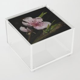 Flowers in Winter Acrylic Box
