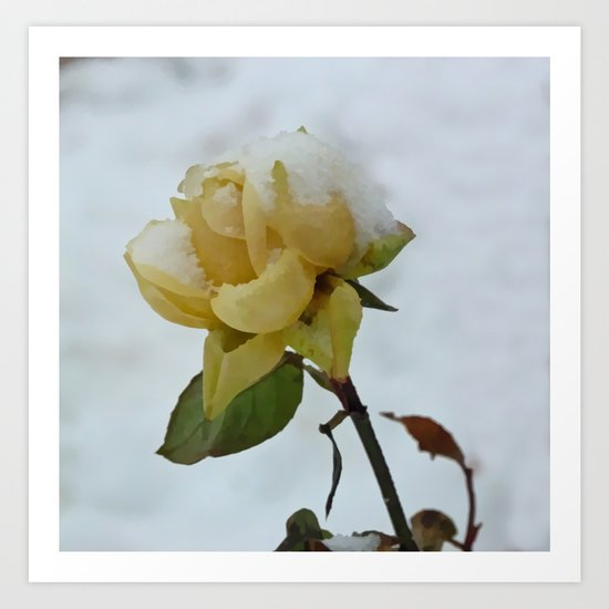 Rose in the Snow Art Print
