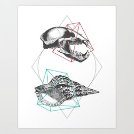 Skull and a Sea Shell Art Print