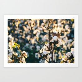 Cotton Field 21 Art Print