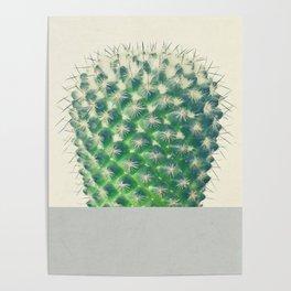 Cactus Dip Poster
