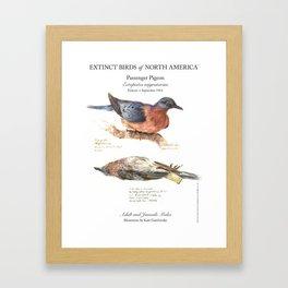 Extinct Birds: Passenger Pigeon Framed Art Print