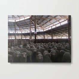 The Holding Pen - Deeargee (DRG) Woolshed Metal Print