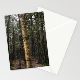 Golden Birch Tree Stationery Cards