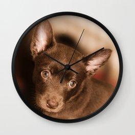 Puppy- Australian Kelpie Wall Clock