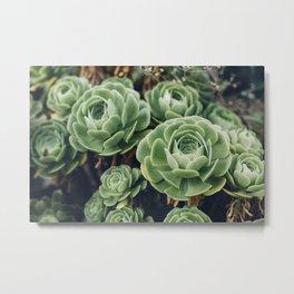 Green Succulent Photo Metal Print