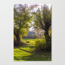 Forest, sunset, art photography at the bulgarian village Lisicite Canvas Print