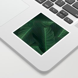 Banana palm greens tropical forest Sticker