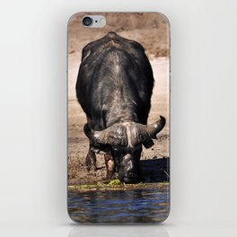 Cape Buffalo. iPhone Skin
