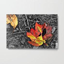 Color Pallette Metal Print