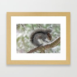 Gray Squirrel Curling Its Tail in a Snowstorm Framed Art Print