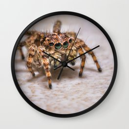 Orange-Brown Jumping Spider, On A Kitchen Tile. Macro Photograph Wall Clock