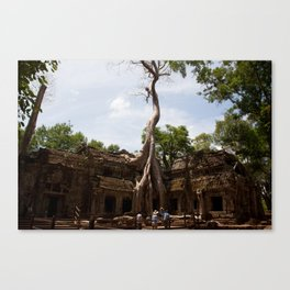 Ancient trees and Ancient Stories Canvas Print