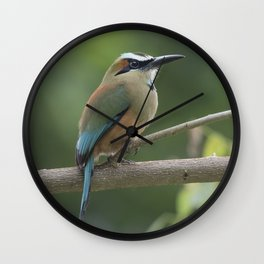 Turquoise-browed motmot perched in Costa Rican rainforest tree. Wall Clock