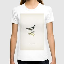 Collared flycatcher (Muscicapa collaris) illustrated by the von Wright brothers T-shirt
