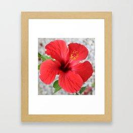 A Stunning Scarlet Hibiscus Tropical Flower Framed Art Print