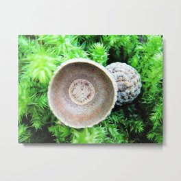 Two pretty acorn cups on green moss Metal Print