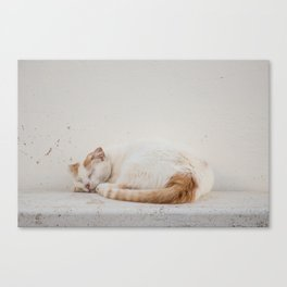 Cat of Burgau Canvas Print