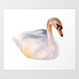 Swan Soliloquy Art Print