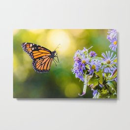 Monarch's Landing. Butterfly Photograph Metal Print