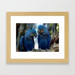 Blue Parrots Framed Art Print