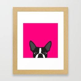 Boston Terrier Hot Pink Framed Art Print