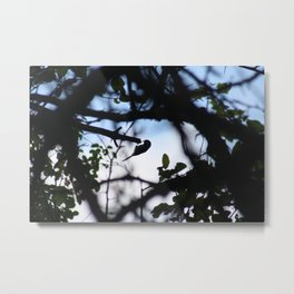 Perched Silhouette Metal Print