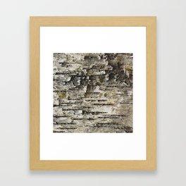 BIRCH TREE BARK Framed Art Print