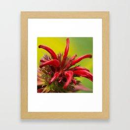 Hummingbird Flower Framed Art Print