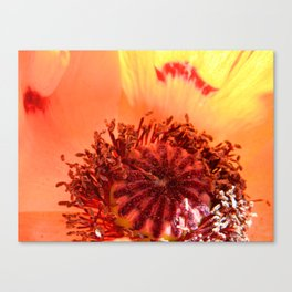 Poppy Love Canvas Print