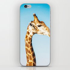 Portrait of a Giraffe iPhone & iPod Skin