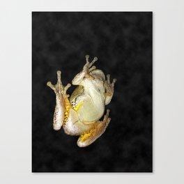 Frog on Window 1 Canvas Print