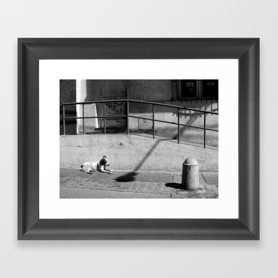 Stray Dog Framed Art Print