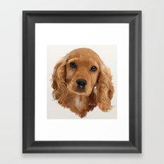 Golden Cocker Spaniel Pup Framed Art Print