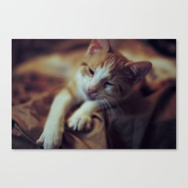 zucca, as a babe Canvas Print