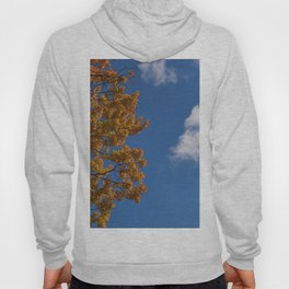 Trees in the fall #montreal Hoody