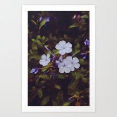 Violet Delights Art Print