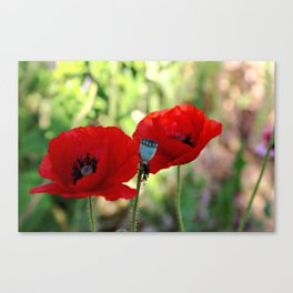 poppies in the summer Canvas Print
