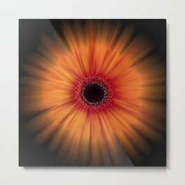 Orange Gerbera Daisy on Black with blur effect Metal Print