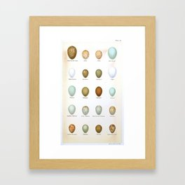 Vintage Bird Eggs  Framed Art Print