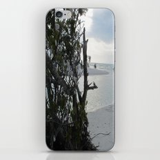Shell Trees iPhone & iPod Skin