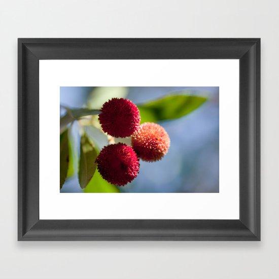 Strawberry tree fruits 8697 Framed Art Print