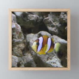 Sea World Colorful Fish Framed Mini Art Print