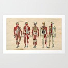 Human Muscle Nerve Artery Anatomy 1841 Print Art Print