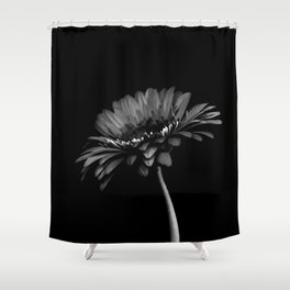 Daisy gerbera. Black and white Shower Curtain