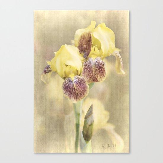 Iris Cream Canvas Print