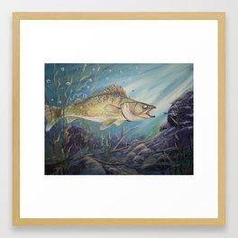 Feeding Time (Walleye) Framed Art Print